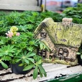 Our fairy houses are so popular! They look best when hidden away so curious eyes have to discover them 🧚🏼♀️ 🔮 @kiernans.gardencentre have a few left in stock! The solar panels make them come alive at night 💖 . . #fairys #fairyhouses #fairygarden #ornaments #ornamentalgarden #gardendesign #landscapes #gardening #gardeninspo #irishgarden #lemonfield #pots #pottery #ceramics #spring #exteriordesign #exterior