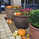 @ab_fab_flowers getting into the swing of Halloween 🎃 They are still taking online orders too..... #supporlocal #shoplocal #staysafe #lemonfield #irish #supportirish #pottery #plantingcontainers #landscaping #flowers #autumn #halloween #exteriordesign