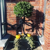 Happy Halloween everybody 👻 🎃  . . Photo cred @finishingno3 featuring our black Square frame planter 🤩 . . #lemonfield #planter #containerplating #pots #pottery #gardening #garden #autumn #winter #halloween #sunny #landcape #exteriordesign #exterior #outdoors #home #homedecor #homeinspo #gardeninspiration #bux #baytree #pumpkin #spider #spookyseason