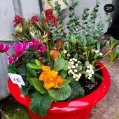 🌟NEW🌟low bowl botanical range ! Beautifully presented by @vaughansgardenflorist  . . #lemonfield #pottery #gardencentre #gardening #gardeninspo #exteriordesign #landscape #wintergarden #gardeningireland #flowers #spring #irishgardendesign #irishbusiness #2021 #ireland #containers #containerplanting